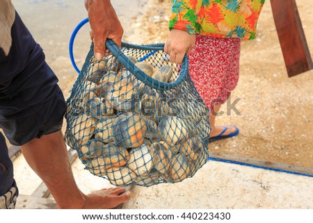 Phu Quoc island, Kien Giang province, VietNam - April 30, 2016 : seafood harvesting of marine fishermen in Phu Quoc Island. Basket cockle, oyster, shellfish in the sea of fishermen on Phu Quoc Island