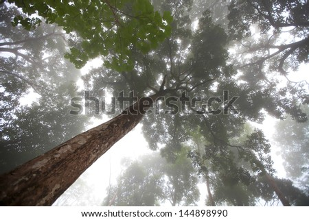 Phu Soi Dao forest in the winter. - stock photo