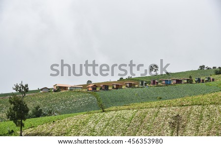Phu Tab Berk hill landscape and Cabbage field in Phetchabun province Thailand, Village on hill,  Unseen in Thailand. - stock photo