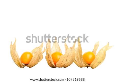 Physalis isolated on white background - stock photo