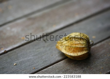 Physalis or Chinese lantern fruit decorated on a wooden table