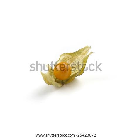 Physialis isolated on white background - stock photo