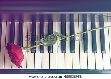 Piano keys and red rose closeup - stock photo