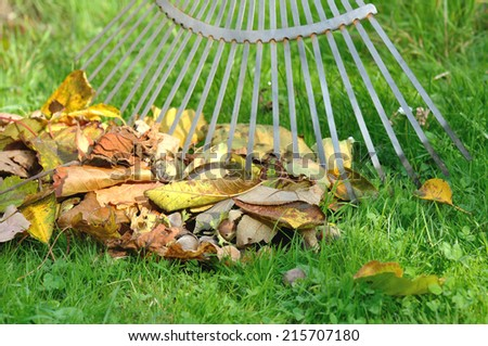 pick up dead leaves with rake - stock photo