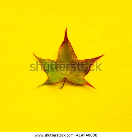 picked leaf from maple tree on a yellow background. square photo - stock photo