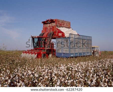 Picking Cotton - stock photo