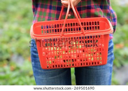 picking strawberry in garden  - stock photo
