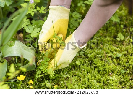 picking weeds - stock photo