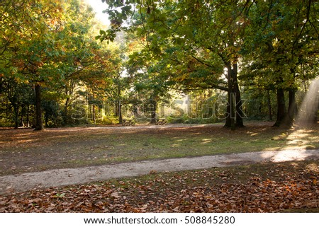 picnic area abandoned in autumn with seasonal colors and rays of dying sun