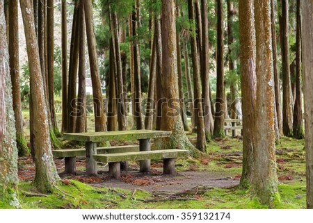 Picnic area in forest with table and benches near Furnas, Azores