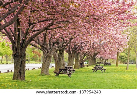 Picnic area under the blossoms of the flowering crab tree - stock photo