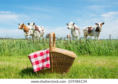 Picnic basket in grass outdoor in front of livestock cows - stock photo