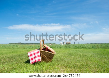 Picnic basket in grass outdoor in front of livestock cows