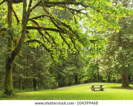 Picnic table at the lawn in the lush North-West forest