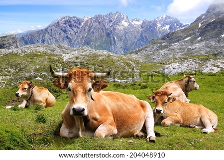 Picos de Europa National Park. Cantabria, Spain - stock photo