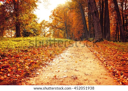 Pictorial autumn landscape view of deserted autumn park with fallen autumn leaves, soft focus applied -autumn landscape in cloudy weather with yellowed autumn trees along lonely autumn alley - stock photo