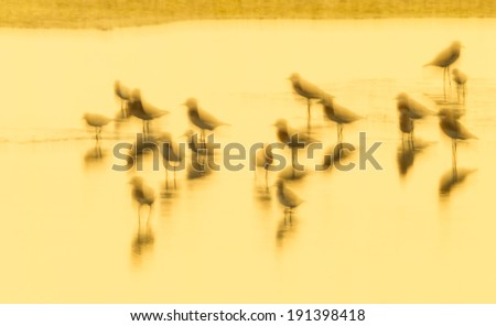 Picture golden light of bird shore in the evening for background/abstract used in nature of Thailand - stock photo