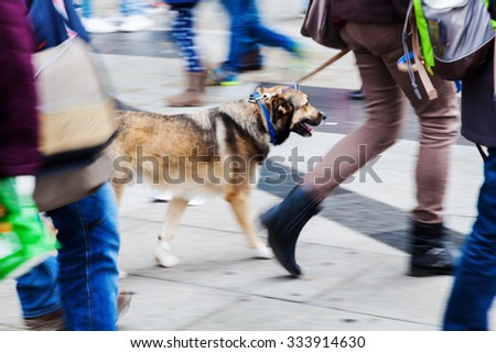 picture in creative blur effect made by camera of a woman walking the dog at the leash in the city - stock photo
