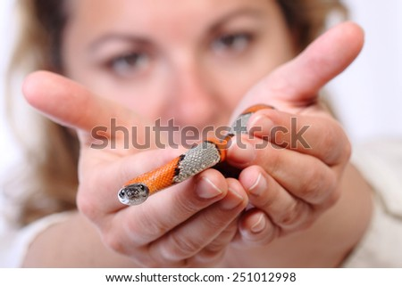 picture of a false coral snake on a human hands - stock photo