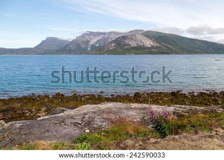 Picture of a fjord in norway, with some stones and a plant in front