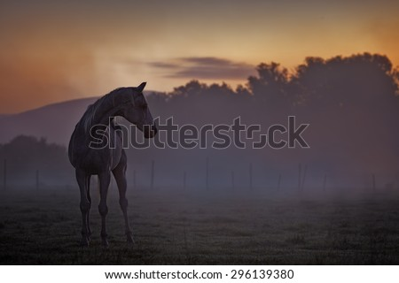 Picture of a horse at dusk with colored background. - stock photo