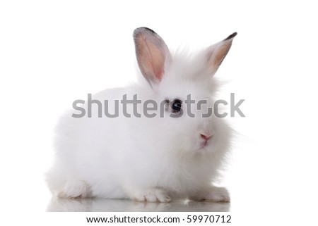 picture of a little rabbit standing on white background - stock photo