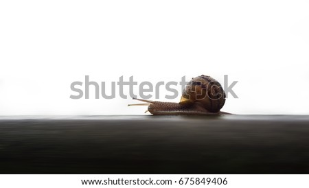 Picture of a single snail; horizontal composition.