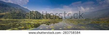 Picture of a Swan on a Lake  - stock photo