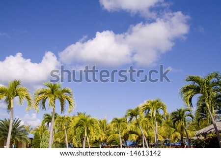 picture of a tropical holidays
