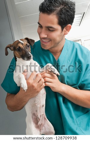 Picture of a veterinary taking care of pet - stock photo