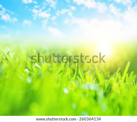 Picture of beautiful green grass field and clear blue sky with bright sunlight, selective focus, wonderful landscape, spring season, rural place, nature outdoors, meadow in countryside - stock photo