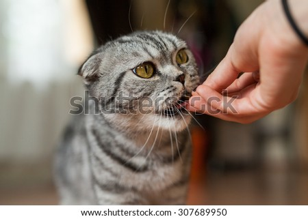Picture of cat which is feeding by woman. Delicious! - stock photo