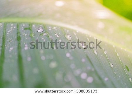 Picture of close up drop of water on green leaf. Green nature view for using as background or wallpaper.