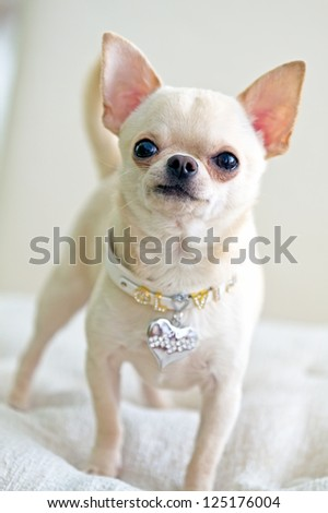 picture of cute dog - stock photo