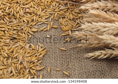 Picture of dry barley beans and wheat ears on jute background. Agriculture, healthy food. Copy space