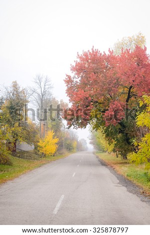 Picture of empty road between colorful autumn trees. Perspective way on foggy day outdoor background.