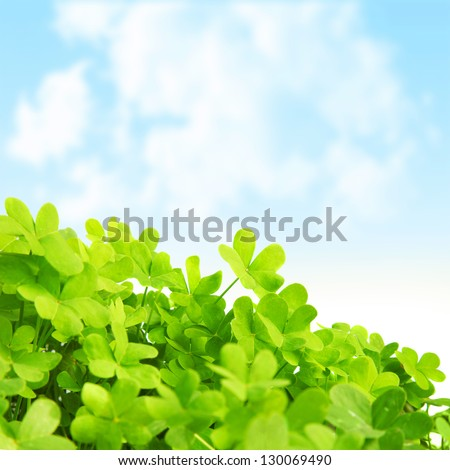 Picture of green clover field, st.Patrick's day background, shamrock plant over blue sky, beautiful spring nature, springtime season, floral border, trefoil -  symbol of luck, irish holiday concept - stock photo