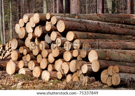 Picture of harvested pine trees during the daytime. - stock photo