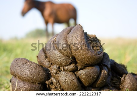 picture of horse faeces from a horse in the background