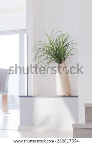 Picture of houseplant in contemporary white interior - stock photo