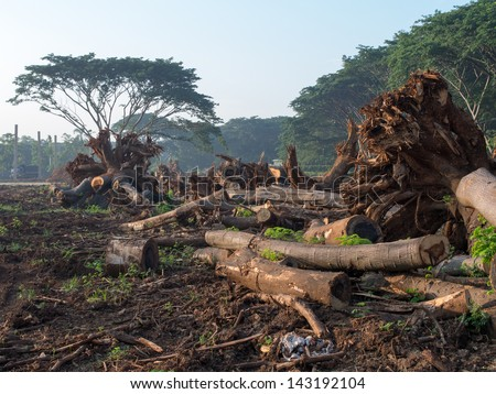 picture of land clearing for construction or housing - stock photo