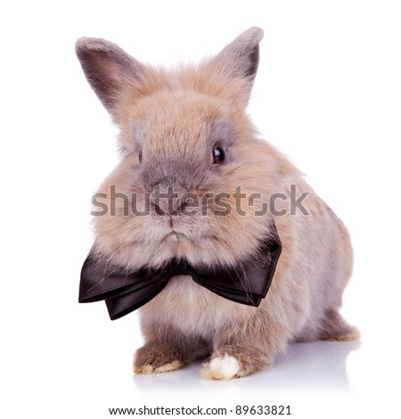 picture of  of an adorable gentleman bunny looking at the camera, on white background