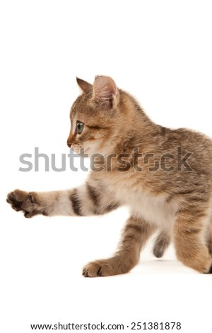 Picture of playful kitten isolated on white