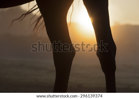 Picture with the legs of a horse with sunrise. - stock photo