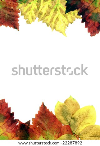 Pictures of dried leaves for textures