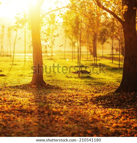 Picturesque autumn park background. Bright yellow and red trees fall background with a bright shining sun.   - stock photo