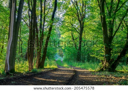Picturesque Bavarian Summer Forrest. Shot in the Woods of Upper Franconia, Germany. Green Foliage on a trecking trail through rocky terrain