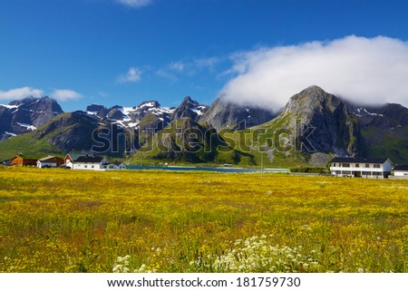 Picturesque flowering fields and mountain peaks on Lofoten islands in Norway on sunny summer day - stock photo