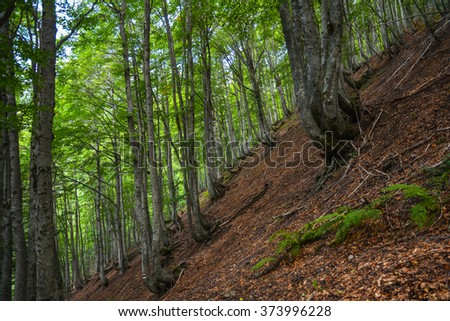 Picturesque forest on a steep mountain slope. - stock photo