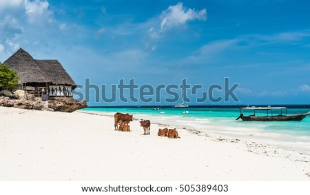 picturesque landscape with cows and house on the beach and a boat in water with blue sky on the background, Zanzibar